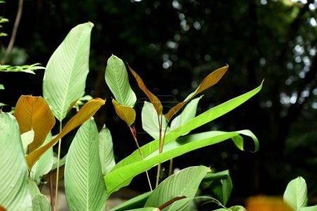 Foto de Hojas verdes en el bosque tropical - Imagen libre de derechos