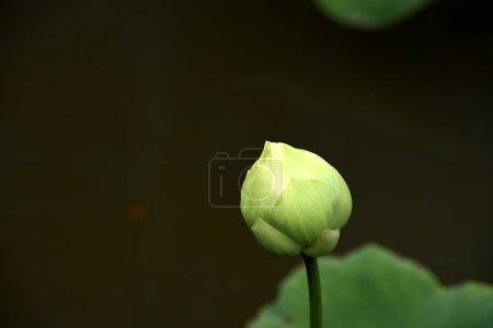 Foto de Green tropical closed flower - Imagen libre de derechos