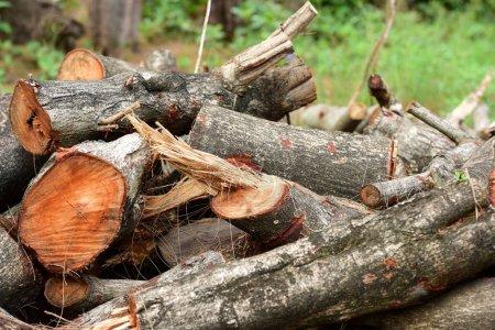 Photo pour Groupe de billes de bois brun - image libre de droit