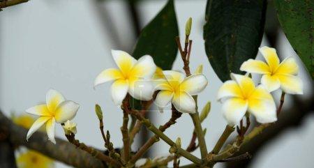 Foto de Hermosas flores amarillas tropicales - Imagen libre de derechos