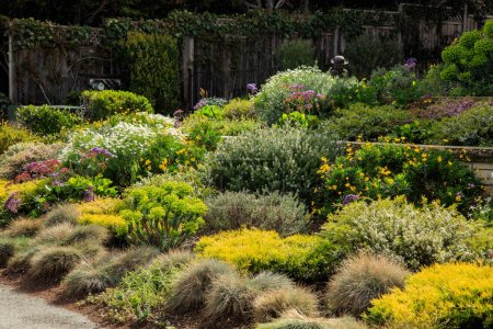 Photo for A varied palette of planting at a home in California showcasing layout and design ideas for multiple plants. - Royalty Free Image