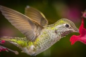 This is a photograph of a hummingbird profile close up without crop