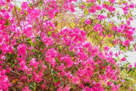 Photo pour Beaux arbres buissons fond floral sur la nature dans le parc - image libre de droit