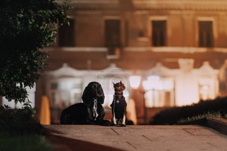 Two dogs walking in the evening sity