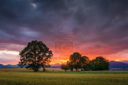 Photo pour Paysage rural avec les champs, les arbres et les montagnes lointaines dans la région de Turiec, Slovaquie - image libre de droit