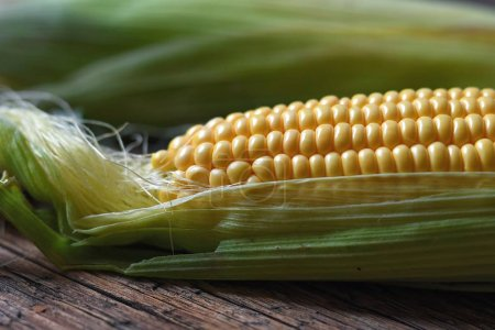 Freshly plucked yellow corn close up, corn background