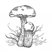 Red-cap bolete mushroom with grass on background in engraved style Vector illustration
