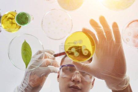 Photo pour Jeune chimiste vietnamien se penchant sur la table et ajoutant du réactif dans la boîte de Pétri - image libre de droit