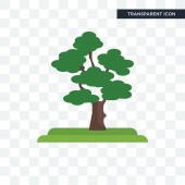 Scarlet Oak tree vector icon isolated on transparent background