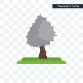 Silver Maple tree vector icon isolated on transparent background