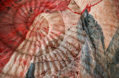 Closeup of ammonite prehistoric fossil on the surface of the stone.