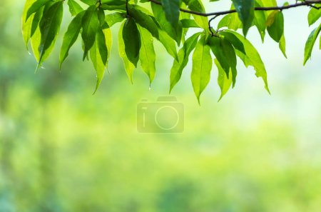 Natural background, focus on leaves plants front. Background blur.