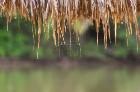 La gota de lluvia del techo de hoja seca de la cabaña, el techo de paja, materiales naturales. enfoque suave .