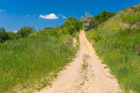Summer landscape with sandy road through overgrown ravine