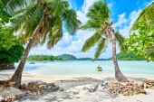 Coconuts stand on tropical beach of Anse L'islette, Mahe Seychelles