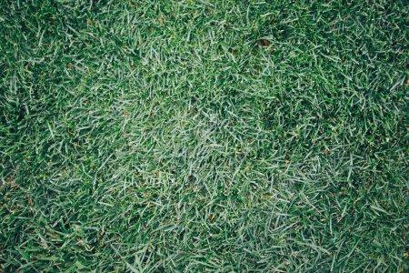 Natur grün Gras Hintergrund Draufsicht. grüne Gras Textur Hintergrund