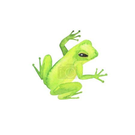 Little green wild frog collection isolated on white background. Hand drawn watercolor illustration