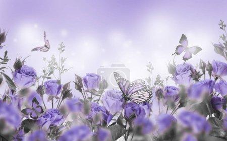zár-megjelöl-a lila rózsa és a pillangók, virágos, háttér
