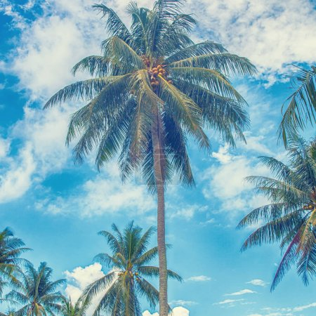 palm trees against blue sky, tropical nature