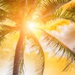 Scenic view of palm trees in sunset light...