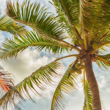 Photo pour Palmiers sur un beau fond nuageux de jour - image libre de droit