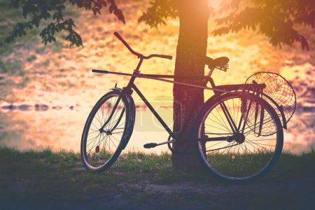 Foto de Bicicleta Vintage por árbol al atardecer con cazamariposas adjuntadas. El sol en el fondo, suave mirar. Bielorrusia, Europa - Imagen libre de derechos