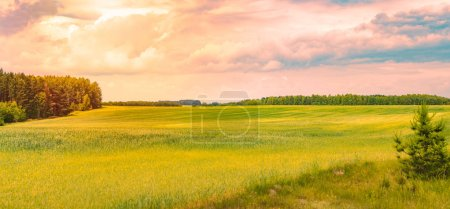 Photo for Sunset over beautiful field with green grass. Sky and clouds in background. Dramatic scenery in Belarus. - Royalty Free Image