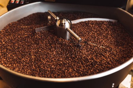 Roasted aromatic coffee beans in a modern coffee roasting machine.