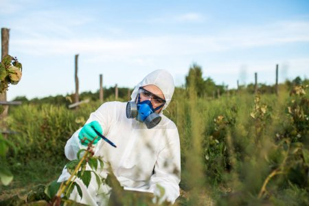 Agriculture pest control - Young worker in protective work wear checking fruit growing plantation.