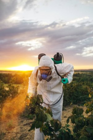 Agriculture pest control - Young worker holding sprayer for spraying organic pesticides on fruit growing plantation during sunset.