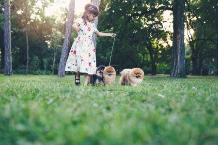 Photo pour Belle petite fille jouissant dans le parc avec ses adorables chiens poméraniens . - image libre de droit