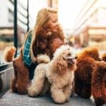 Beautiful middle age blonde female dog walker, enj...