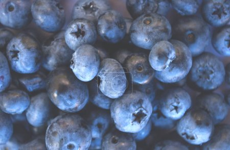 Delicious freshly picked bluberry background. Healthy food concept.
