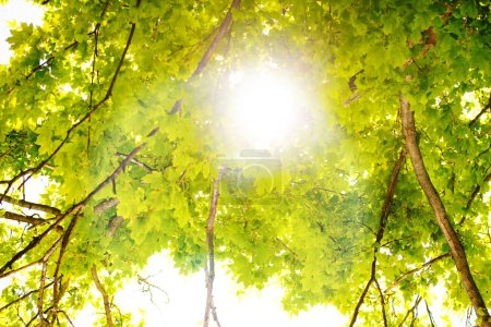 Photo for Scenic forest of fresh green deciduous trees framed by leaves, with the sun casting its warm rays through the foliage - Royalty Free Image