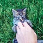 Kitten and human hand on grass close up, kitten, c...