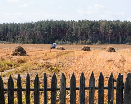 An old tractor plows a field in a village, haystacks and an old fence stand on the field, there is a forest on the horizon, farming