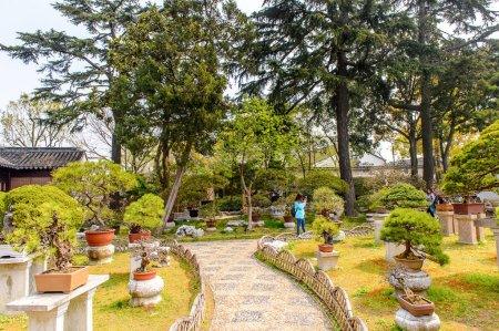 Photo for SUZHOU, CHINA - APR 1, 2016: The Humble Administrator's Garden,  a Chinese garden in Suzhou, a UNESCO World Heritage Site - Royalty Free Image