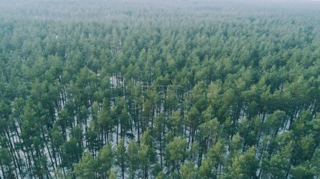 Photo for Aerial view of trees in the snowy winter forest - Royalty Free Image