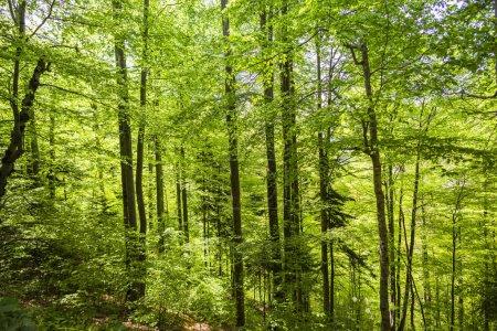 A l'intérieur de la forêt montagneuse au printemps