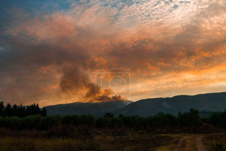 Photo for Autumnal field at sunset time, natural background. - Royalty Free Image