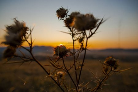 Photo pour Silhouette des plantes sur fond de coucher de soleil flou - image libre de droit