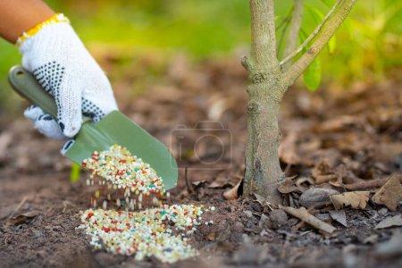 Farmer giving fertilizer to plant...