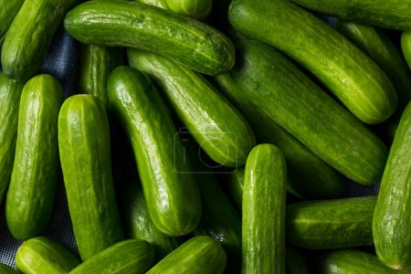 Photo for Raw Green Organic Mini Cocktail Cucumbers in a Bunch - Royalty Free Image