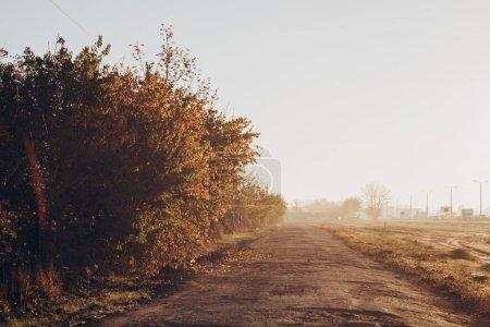 Foto de La carretera que conduce a través del campo. Temprano en la mañana soleado. Vista desde el coche - Imagen libre de derechos