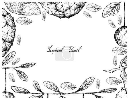 Tropical Fruit, Illustration Frame of Hand Drawn Sketch of Araticum or Duguetia Furfuracea and Diospyros Filipendula Fruits Isolated on White Background.