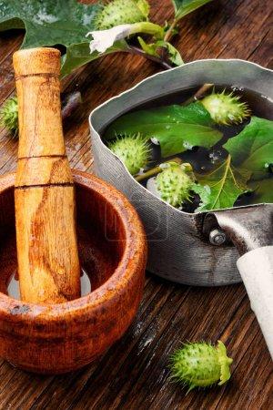 Photo pour Boisson curative de plantes médicinales datura.Herbes médicinales - image libre de droit