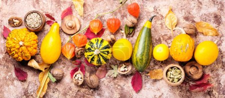 Photo for Beautiful autumn seasonal background with pumpkins .Autumn nature concept - Royalty Free Image
