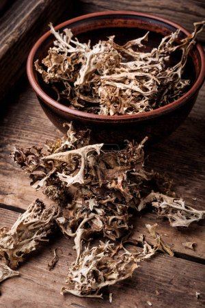 Photo pour Herbes médicinales. Icelandic moss en phytothérapie. Médecine naturelle, herbes - image libre de droit