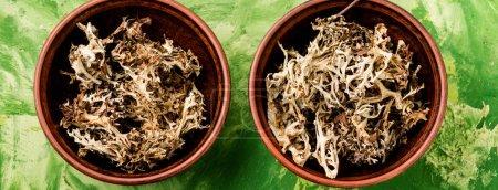Photo pour Herbes cicatrisantes.Mousse d'Islande en phytomédicine.Médecine naturelle, herbes - image libre de droit