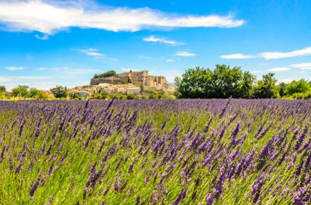 Lavender fields at village Gordes, a small medieval town in Provence, Travel destination in France.